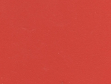 0699 Оранжевые Бархатцы